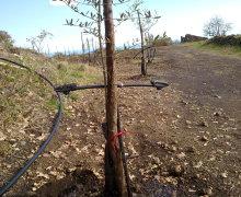 Baffo irrigazione