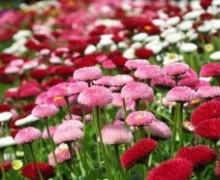 cura fiori in balcone durante le vacanze