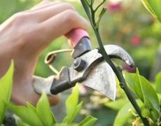 Consigli di giardinaggio per il mese di Marzo