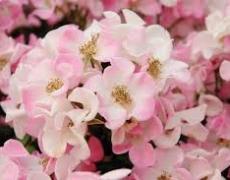 Consigli di giardinaggio per il mese di Maggio