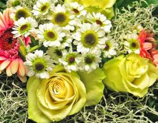 Consigli di giardinaggio per il mese di Settembre…
