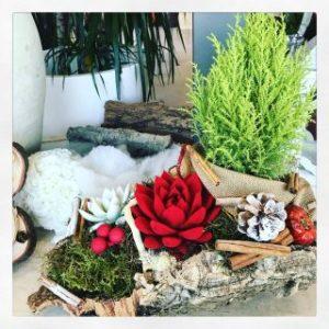 Decorazione Natalizie con echeveria pianta grassa